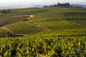 The Beaujolais Wine Route: A Snapshot